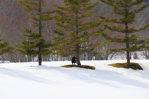 s-2019223白馬de雪あそび_190228_0347