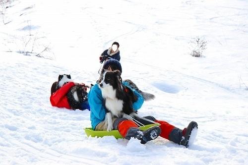 s-2019223白馬de雪あそび_190228_0315