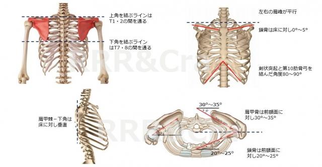 胸郭のニュートラル2