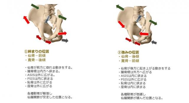 仙腸関節の締まりと弛み