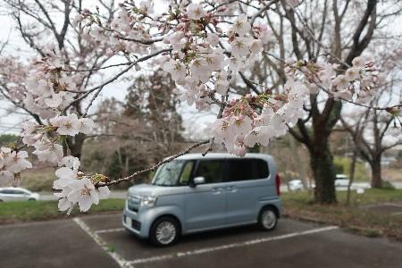 桜とN-BOX20190329-01