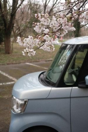 桜とN-BOX20190329-02