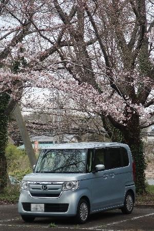 桜とN-BOX20190329-08