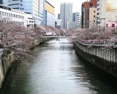 19-3-28 桜