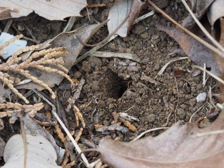 ハナバチの巣