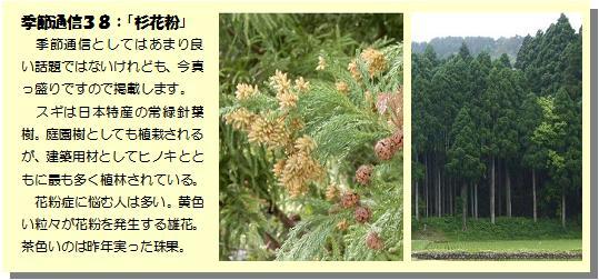 季節通信38杉花粉