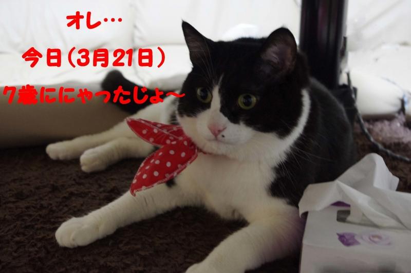 2012 03 21_3094_edited-1