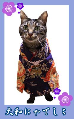 kimono16_kotaro.jpg