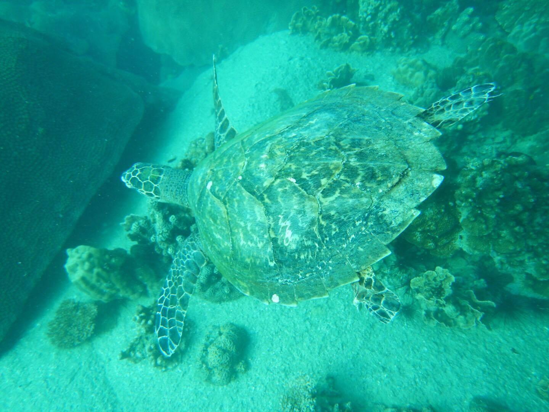 タオ島水中写真、加々美さん