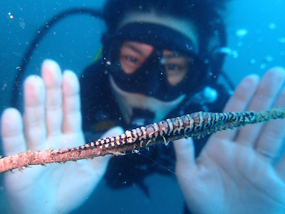 タオ島 ファンダイビング 水中生物