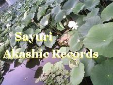 アカシックレコードリーダーさゆり はすの池 アカシックレコードリーディング