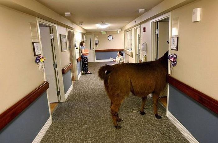 0305面会に来ました-llama-hospital