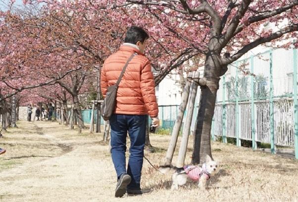 2B03 河津桜 0224