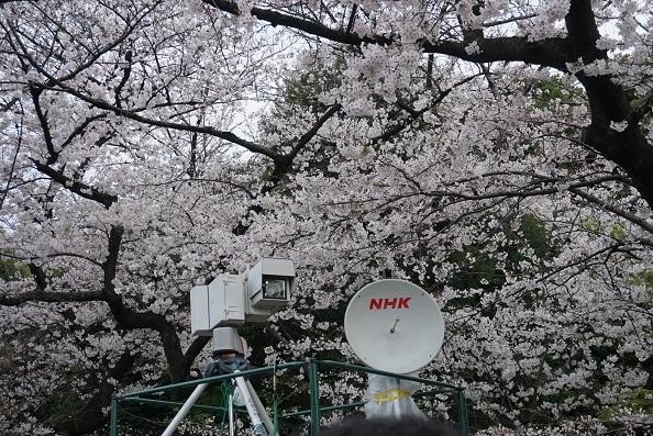 6H08 千鳥ヶ淵 NHK定点カメラ  0330
