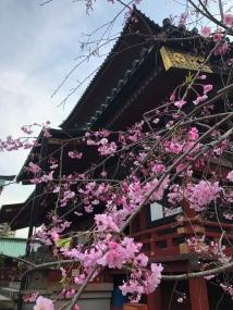 6静岡浅間神社