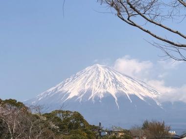 2019-03-27 富士山本宮浅間大社から望む富士山 (1)