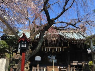 2019-04-03 月詣り産土様白山神社 (1)