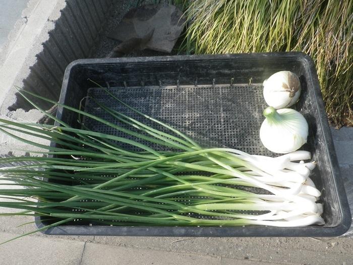 収穫3_19_04_06