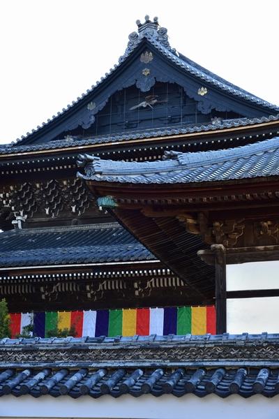 _20190114_takada (40)