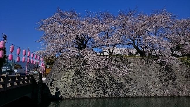 平成さいごの桜・桜・桜