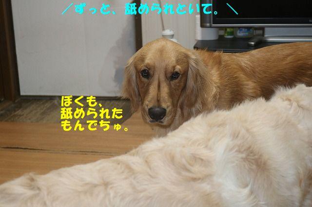 IMG_5462.jpg