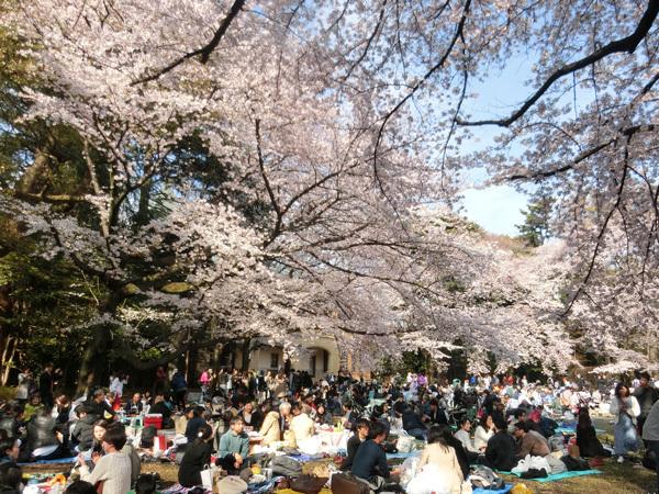 桜を見るひと、人を見るひと! 駒場公園、東大駒場キャンパス!
