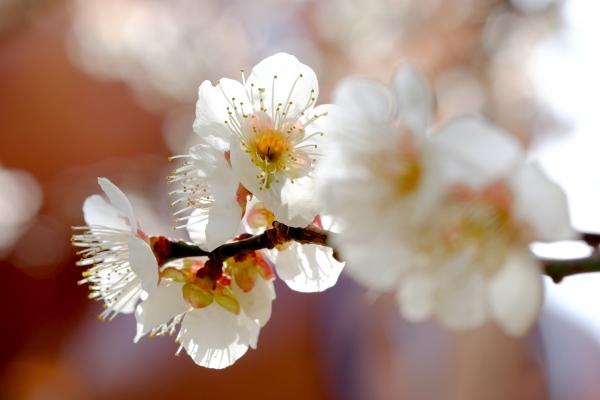 心はずむ春