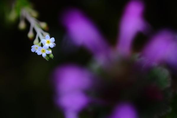 足元の小さな春