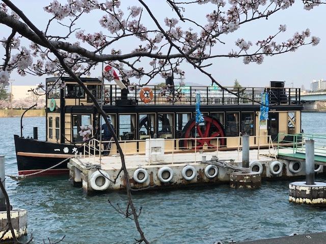 2019桜桜1