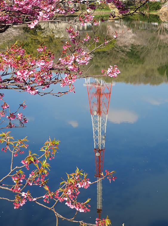190331,三ツ池公園の桜3