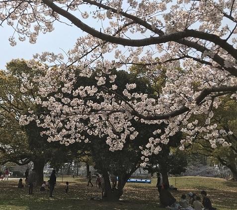 20190407丸亀城桜2