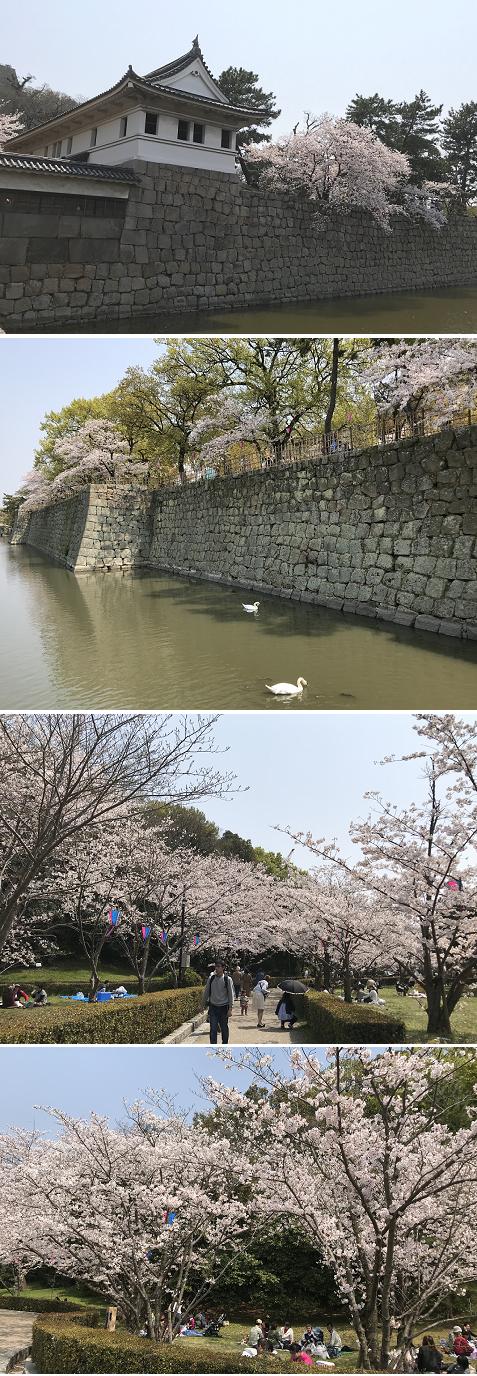 20190407丸亀城桜1