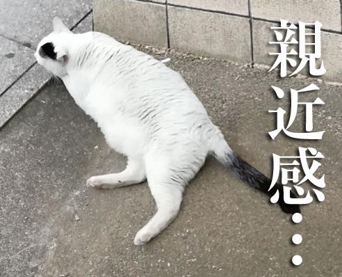 0310hakushures_cat.jpg