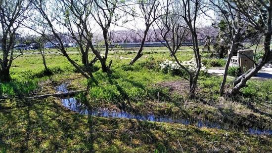 海老川沿い