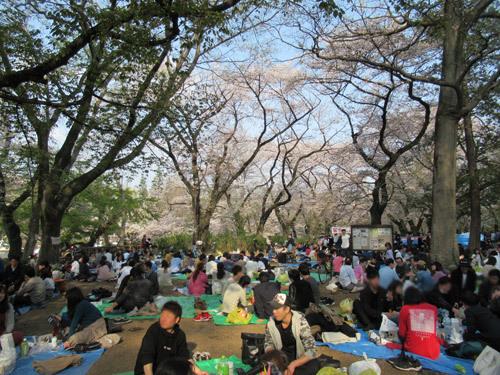 井の頭公園お花見散歩2019