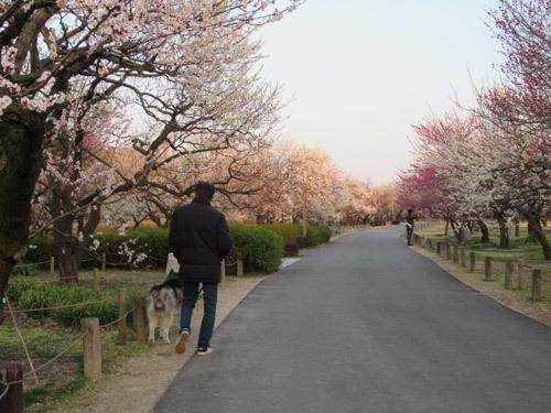 偕楽園公園