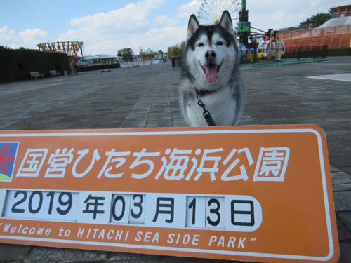 国営ひたち海浜公園散歩
