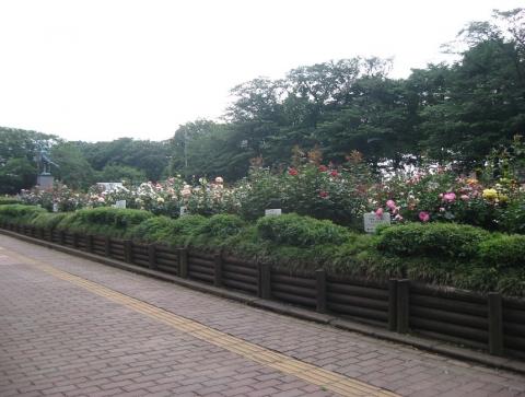 09与野公園のバラ(その1)索引記事