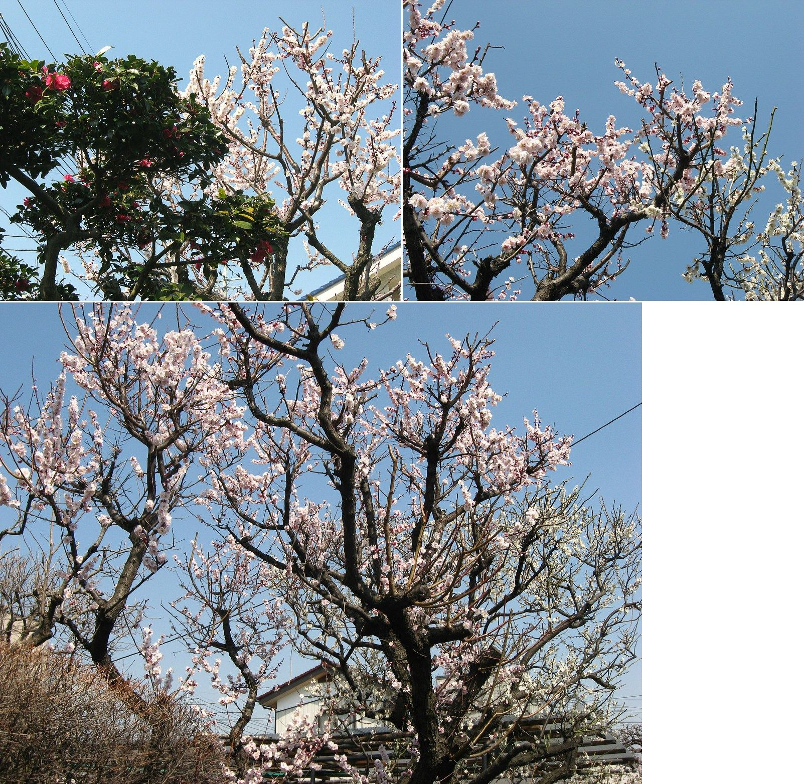 oomy-bonsai06.jpg