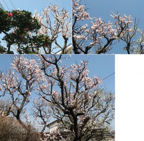 oomy-bonsai06