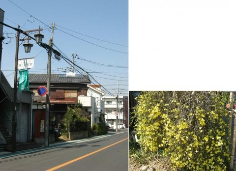 oomy-bonsai07