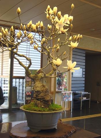 oomy-bonsai11
