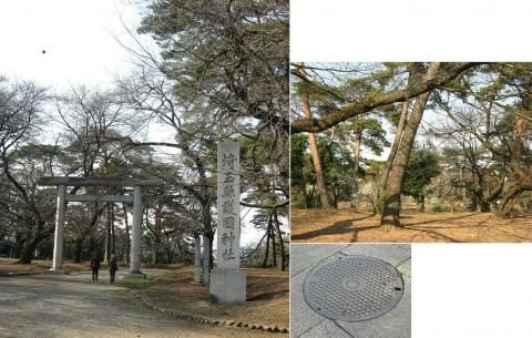 oomy-bonsai14