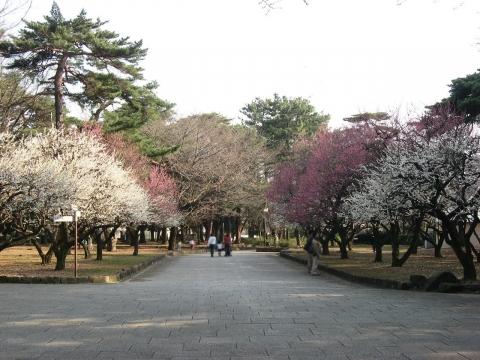 oomy-bonsai15