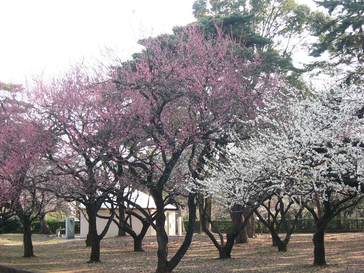 oomy-bonsai16.jpg