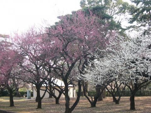 oomy-bonsai16