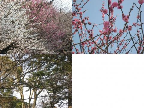 oomy-bonsai17