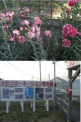 tkawazu_09
