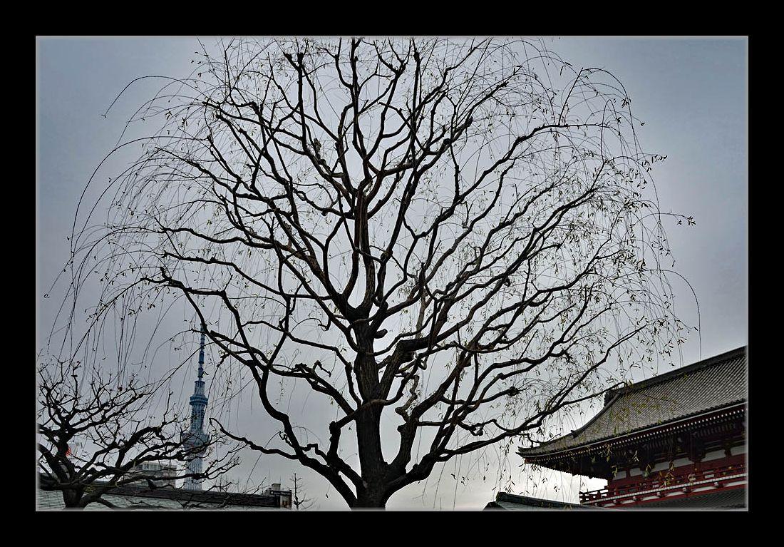 浅草寺からツリー