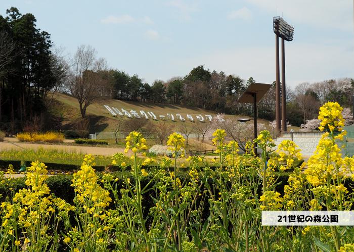 《いわき市桜情報2019》21世紀の森公園のソメイヨシノが見頃となりました! [平成31年4月7日(日)更新]1